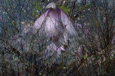 Magnostormacea by Deborah Baker
