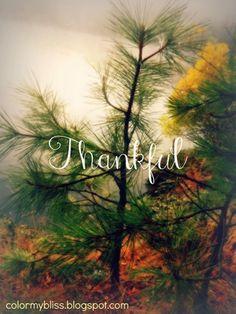 Thankful ~