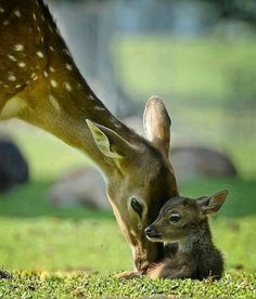 Find images and videos about deer, cute animals and baby animals on We Heart It - the app to get lost in what you love. Nature Animals, Animals And Pets, Beautiful Creatures, Animals Beautiful, Cute Baby Animals, Funny Animals, Mother And Baby Animals, Tier Fotos, Cute Animal Pictures
