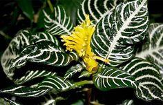 plantas-exoticas-de-interior-01