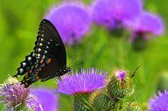 GMiller398WL Butterfly 2010, via Flickr. -- 2010 Innsbrook Photo Contest, Innsbrook Resort, Missouri MO