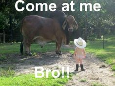 """Human bros have much to learn from the animal kingdom. 