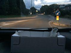 Navigatore auto , ultimo modello!
