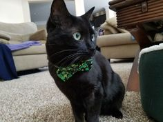 "From Ruchita: ""This is Nina. She's wearing her four leaf clover bowtie to show that black cats are good luck! Love seeing all the black cats this month!"" In October, we are celebrating black cats for Halloween. www.catfaeries.com - Products for good behavior & health for the modern housecat."