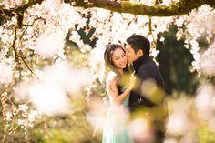 Cherry Blossom engagement session at Washington Park Arboretum. - photo by Seattle based wedding photographer Nick Leung