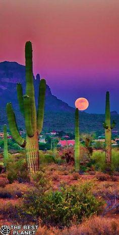 "travelandseetheworld: ""Sunset in the beautiful Sonoran Desert near Chandler, Arizona - photography by Saija Lehtonen "" Beautiful Sunset, Beautiful World, Beautiful Places, Amazing Places, Landscape Photography, Nature Photography, Photography Tips, Cactus Photography, Digital Photography"