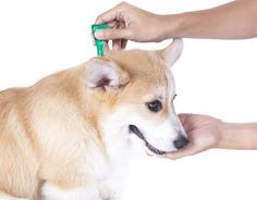 Holistic Dog Supplements - Choose the Best for Your Four-Legged Friend