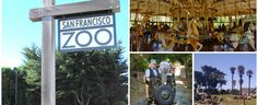 5 Things You Must Do at the San Francisco Zoo