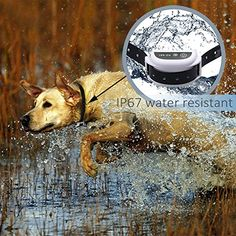 Amazon.com : [Rechargeable Upgraded Version] WOLFWILL Waterproof Wireless Dog Fencing System 500 M Radius Remote Control w/ 2 Receiver Collars & LED Display Transmitter : Wolfwill : Pet Supplies