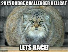 Hellcat shmellcat