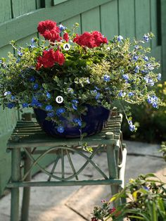red and blue flowers in pot (Could add some white flowers for a red, white and blue pot.)