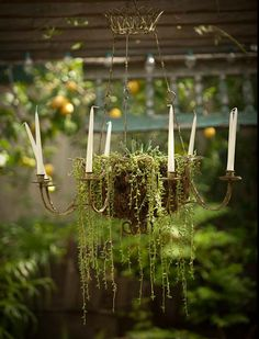 Chandelier planter: might be more fire-safe to use fairly lights on an old chandelier rather than candles