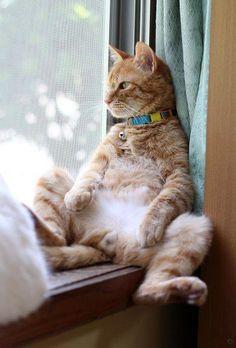Un Chat à sa Fenêtre, dans la Position 'Fauteuil'