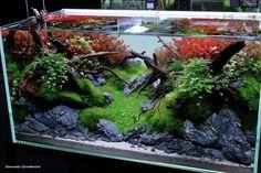 Aquarium Landscape, Planted Aquarium, Location History, Terrarium, Fresh Water, Aquascaping, In This Moment, Photo And Video, Plants