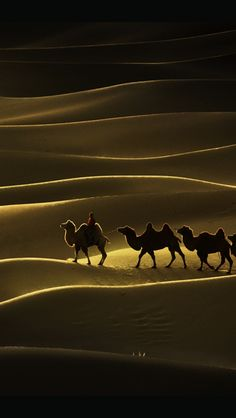 camels anddunes...  so alike