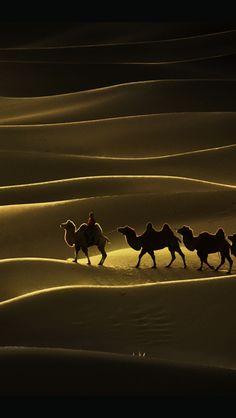 camels anddunes...  so alike