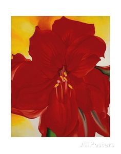 Red Amaryllis, c.1937 Art Print at AllPosters.com