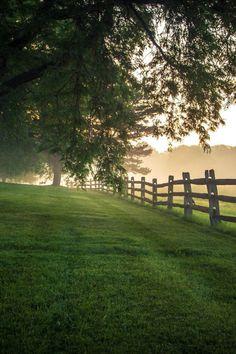"""ponderation: """"Foggy Morning Fences by Johnny Joo """""""
