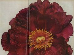 Irving penn  http://markdsikes.com/2012/12/25/miles-redd-continued/