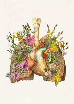 Enjoy our new Human anatomy print Lungs and heart with flowers Art Print -Human Anatomy Study Print ~The page is A4 size, 8,2x11,6 (210 x 297mm)  *About