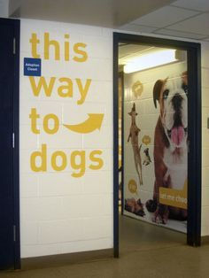 It would be lovely to have signs at the front desk directing cat and dog seekers. Shelter Dogs, Animal Rescue Shelters, Indoor Dog Park, Animal Rescue Center, Adoption Center, Shelter Design, Pet Hotel, Dog Area, Dog Daycare