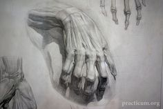 Russian academic drawing - anatomical studies of hands