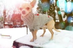 Norwegian Wool Sweater. Pris: 299,-  www.glamdog.org