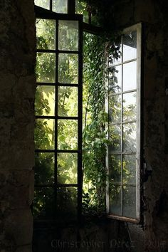 Abandoned Places ~ Fenetre Ouverte The warmth of the late afternoon sun streaming through open windows inviting the breeze to dance and swirl inside. Dark Green Aesthetic, Nature Aesthetic, Plant Aesthetic, Aesthetic Design, Window View, Open Window, Nature Sauvage, Slytherin Aesthetic, Through The Window