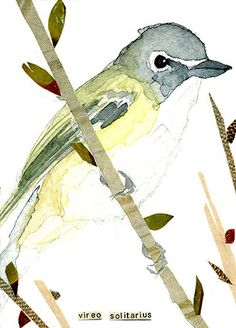 ACEO ORIGINAL WATERCOLOR BIRD SERIES SOLITARY VIREO | aceo watercolor | Carol Kroll Art