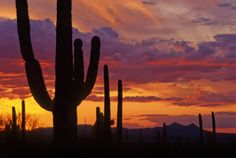 Arizona is renowned for its spectacular sunsets and sunrises.