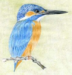 Reasonable tutorial on the basics of drawing birds, trees, animals etc. Landscape Drawings, Bird Drawings, Animal Drawings, Easy Drawings, Drawing Birds, Drawing Animals, Pencil Drawings, Angel Drawing, Butterfly Drawing