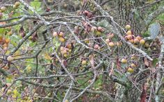 Best Fruit Trees To Plant For Deer | Hunting, Fishing and Shooting News on Grand View Outdoors