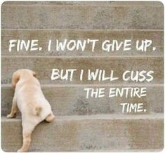 New Funny Dogs With Captions Make Me Laugh Hilarious Humor Ideas Great Quotes, Quotes To Live By, Me Quotes, Funny Quotes, Funny Memes, Inspirational Quotes, Hilarious, Qoutes, Style Quotes