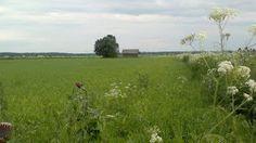 Alajoelta. Copyright PeeKoo. http://naistenpaivankunniaksi.blogspot.com