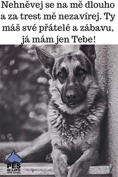 💖ALOHA MAHALO💖💖💖💖💖💖💖💖💖💖💖💖💖💖💖💖 Belgian Malinois, True Words, Cool Words, Cute Dogs, Lol, Funny, Quotes, Animals, Inspiration