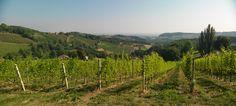 """Die Einzellage """"Grassnitzberg"""" des Weinguts SKOFF ORIGINAL Vineyard, Wine, The Originals, World, Outdoor, Boden, Outdoors, Vine Yard, Vineyard Vines"""