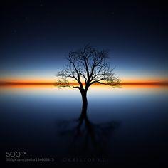 The Tree by Kristo pixioo