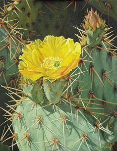 Lots of Spines! by Carol Amos. Cactus Painting, Cactus Art, Cactus Flower, Flower Art, Agaves, Cacti And Succulents, Cactus Plants, Cacti Garden, Rare Flowers