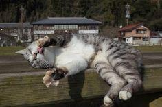 都市部とは違う環境の中で眠る猫