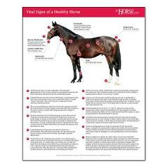 It's essential that every horse owner know their horse's normal, healthy resting temperature, heart rate, respiration rate, and other vital signs. This poster will help you know what to look for. The Vital Signs of a Healthy Horse poster comes in three sizes making it perfect for your barn, tack room, or feed room! #horses #horsehealth