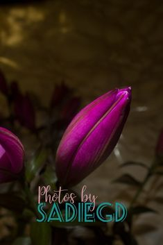 Flower Series 6 Hot Vibrant Pinks Stand Out Against The Darkened Marbled Background The Petals Have Subtle Textures, 6 Photos, Something Beautiful, Photographic Prints, Tulip, Fine Art Prints, Marble, Vibrant, Colour