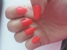 Calgel new coral summer edition