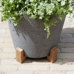 These teak pot feet elevate pots to protect patios and decks from rot, scratches & water rings. Buy now to keep your outdoor garden looking its best.