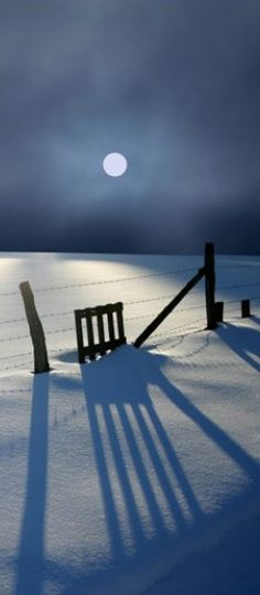 Peaceful Moonlit Snowscape