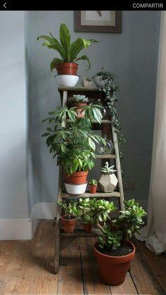 Casa jardin interior pequeño escalera #plantsdecoration