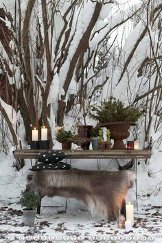 love this winter table    from a Swedish blog site  Trädgårdsflow: Årskrönika