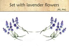 Set with lavender flowers by AnnaY on Creative Market
