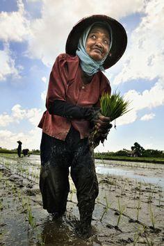 Bali - Balinese farmer's ❀  Bali Floating Leaf Eco-Retreat ❀ http://balifloatingleaf.com ❀