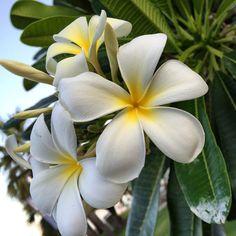Magic Darwin flowers