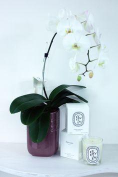 Orquídeas y velas Diptyque